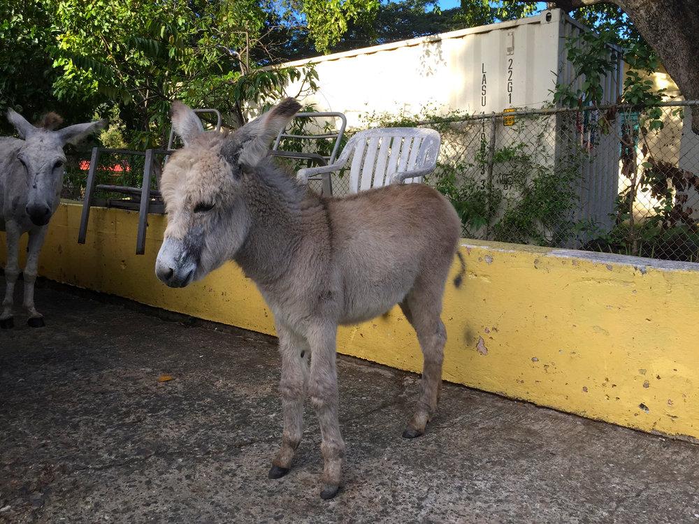 DonkeyBaby.jpg