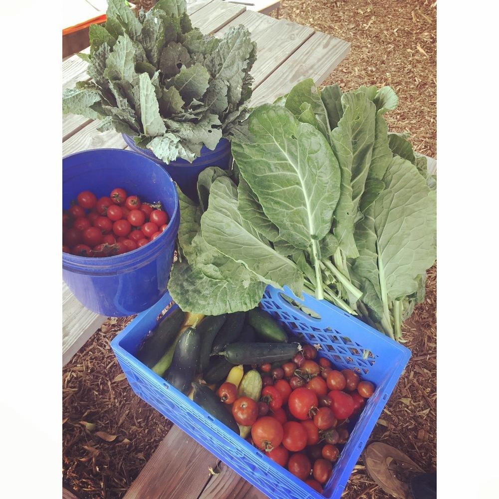 Fresh, organic produce to the Shelter's kitchen. Everyday.
