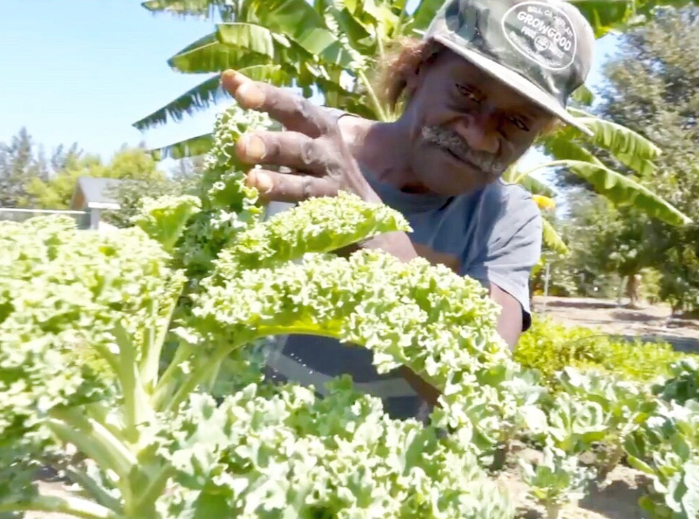 Charlie with his kale plants. Charlie has provided hundreds of pounds of kale and collards to the Shelter's kitchen.