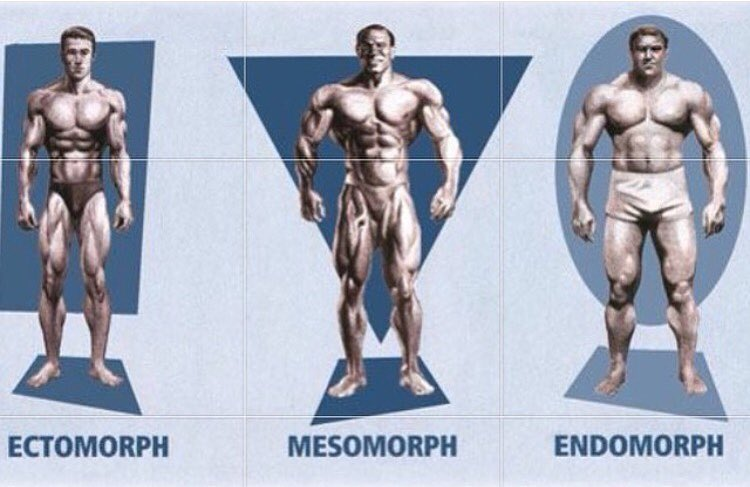 bodytype_somatotype