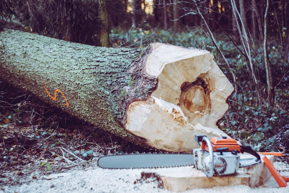 Best Chainsaw   Disclaimer: There are affiliate links in this post. This means that at no cost to you, I will receive a small commission if you purchase through my link. I will only ever promote the products and services that I trust and 100% recommend. You may read my full  disclosure policy  for more information. Thanks for supporting my business in this way.