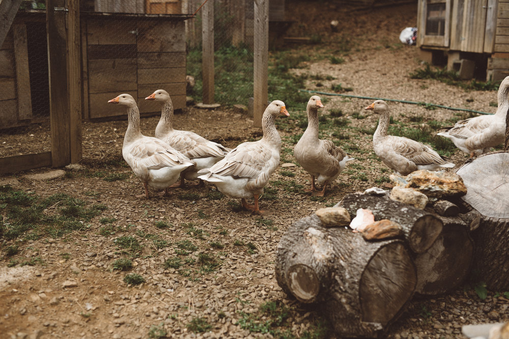 Mikaela Hamilton- HipCamp Duck Dance Farm-11.jpg