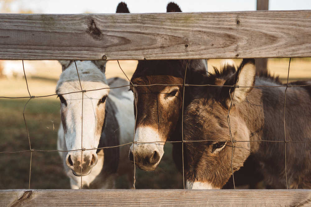 Mikaela Hamilton-Stillwaters Farm-73.jpg