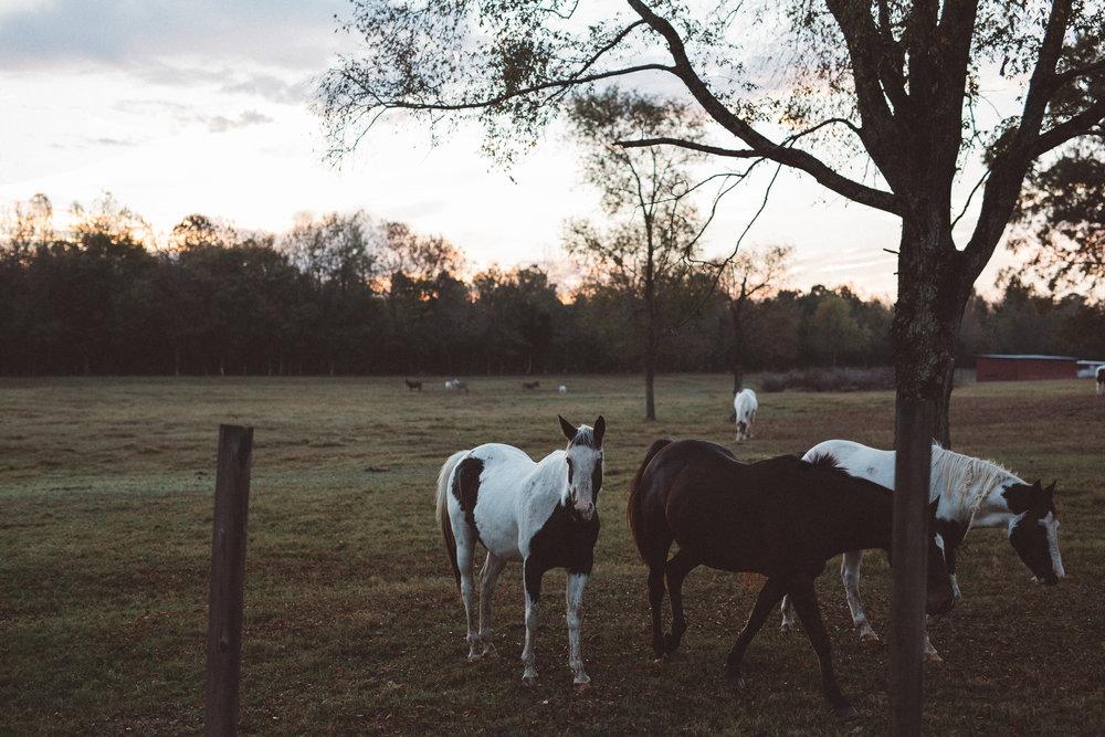 Mikaela Hamilton-Stillwaters Farm-124.jpg