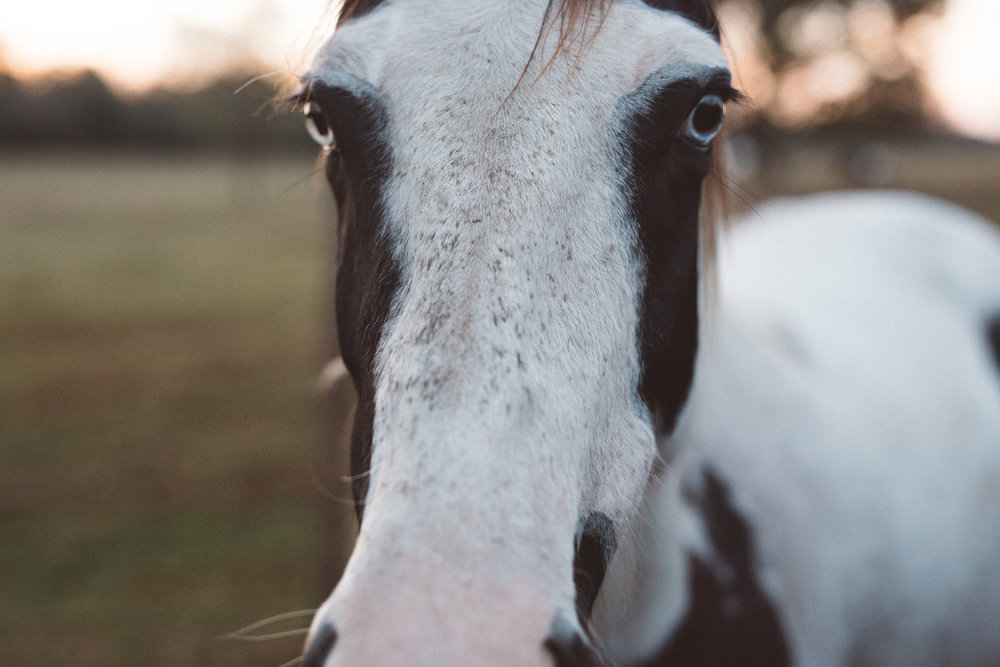 Mikaela Hamilton-Stillwaters Farm-129.jpg