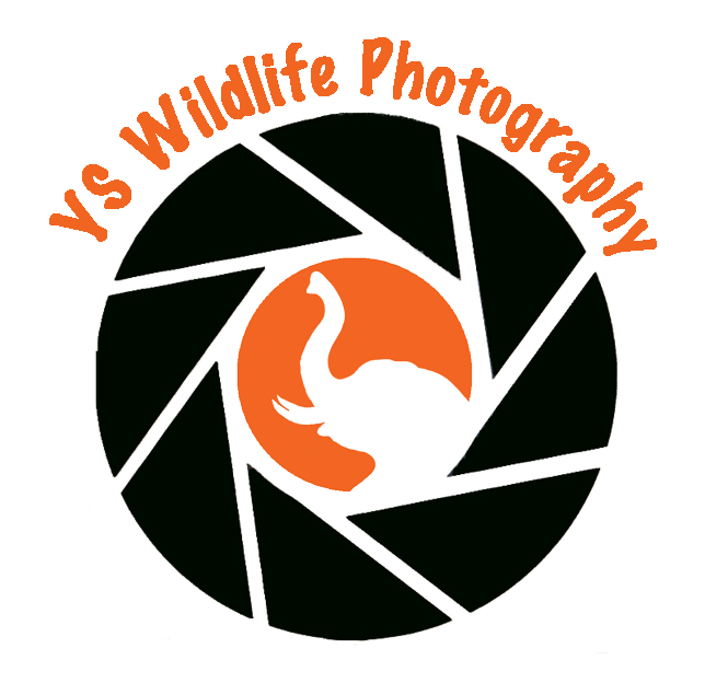YS Wildlife Photography