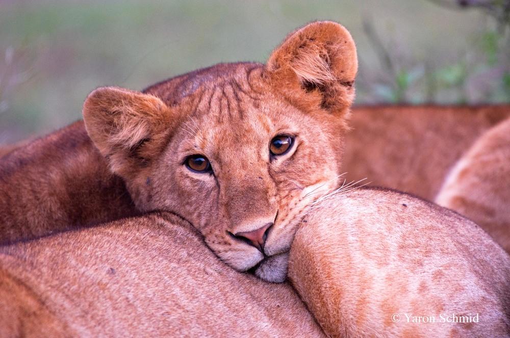 """Ever Hopeful"" photographed in Serengeti, Tanzania 2016"