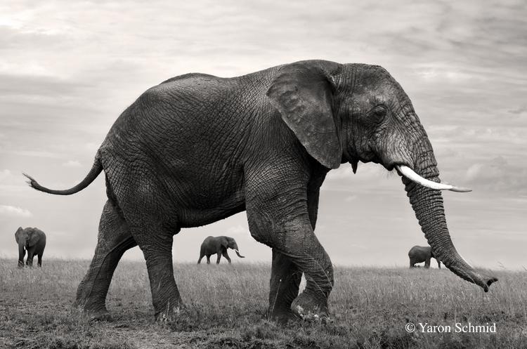 Near and Far - Serengeti, Tanzania
