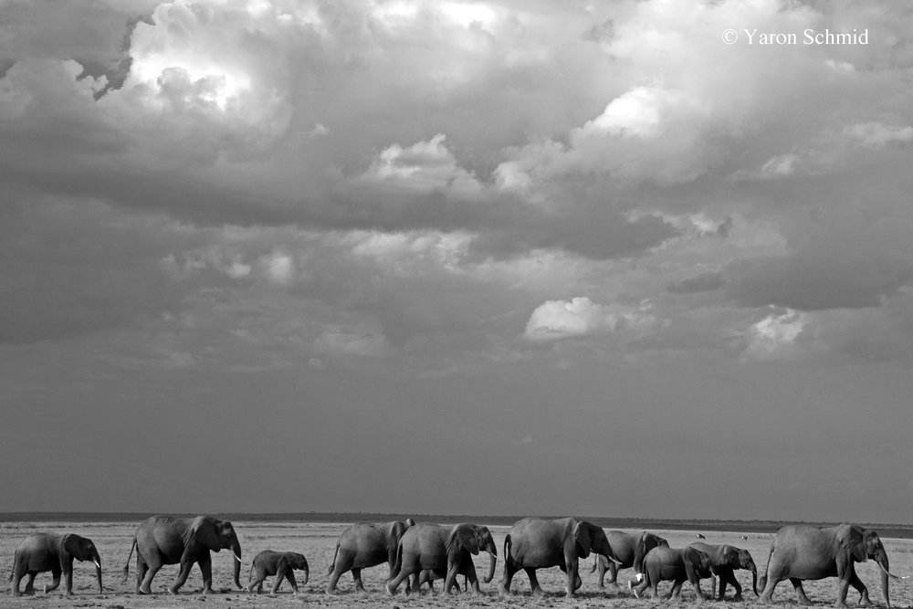 Under Amboseli Skies