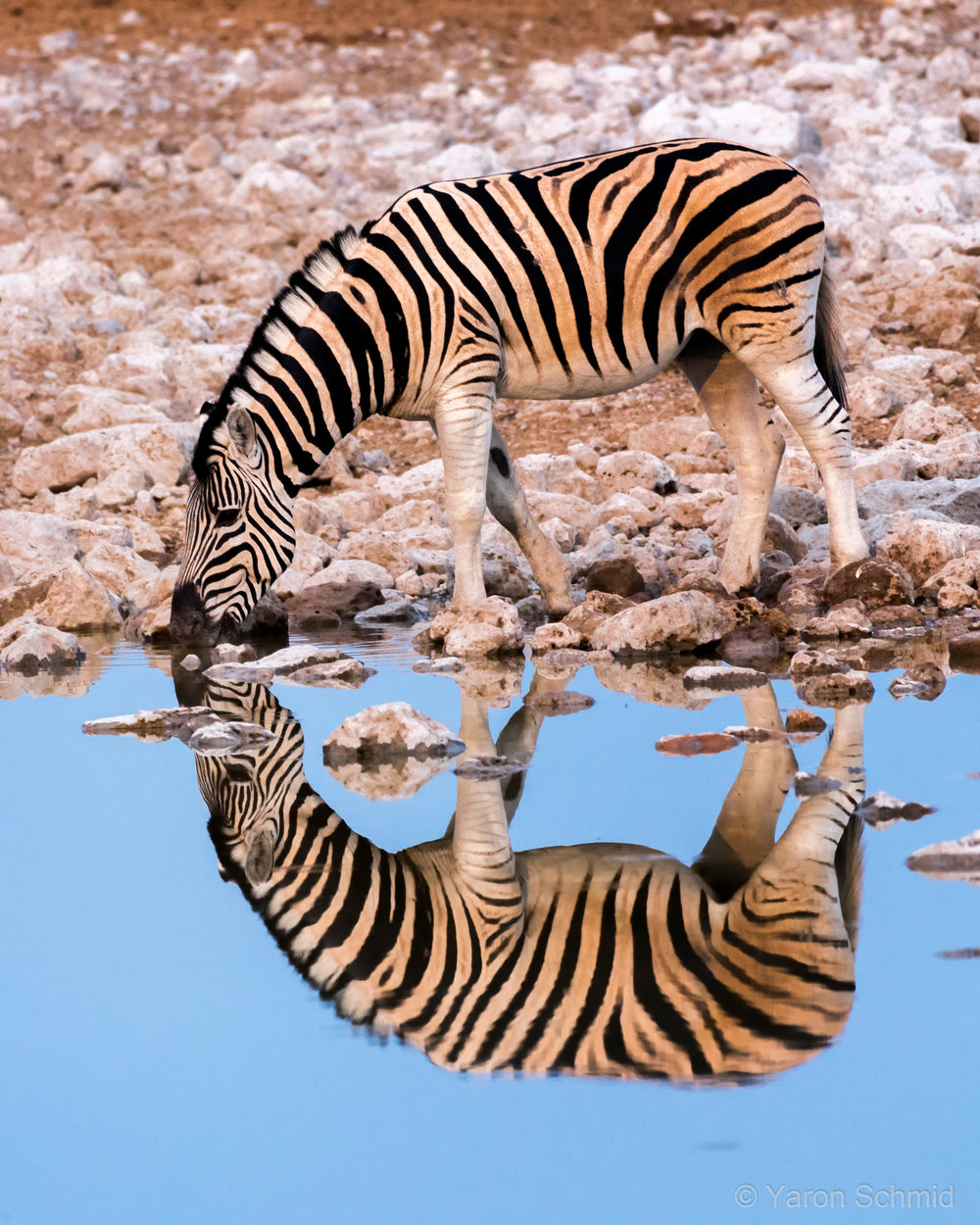 Reflecting Stripes