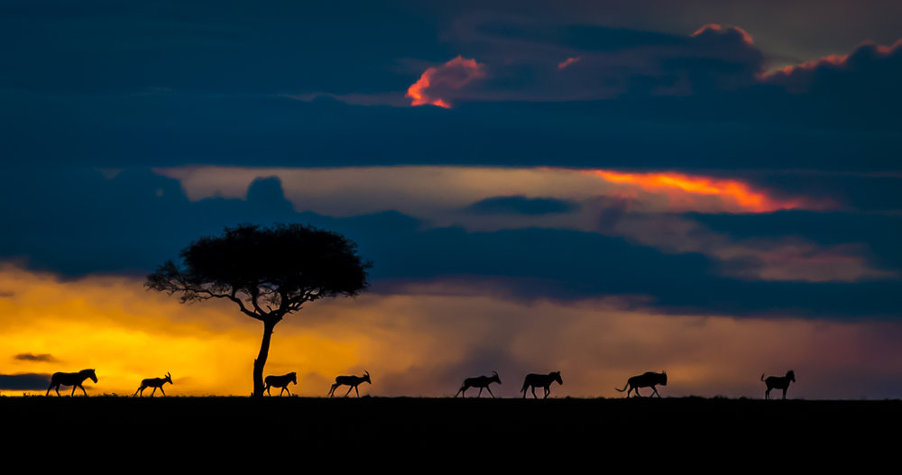 Perfect African Sunset