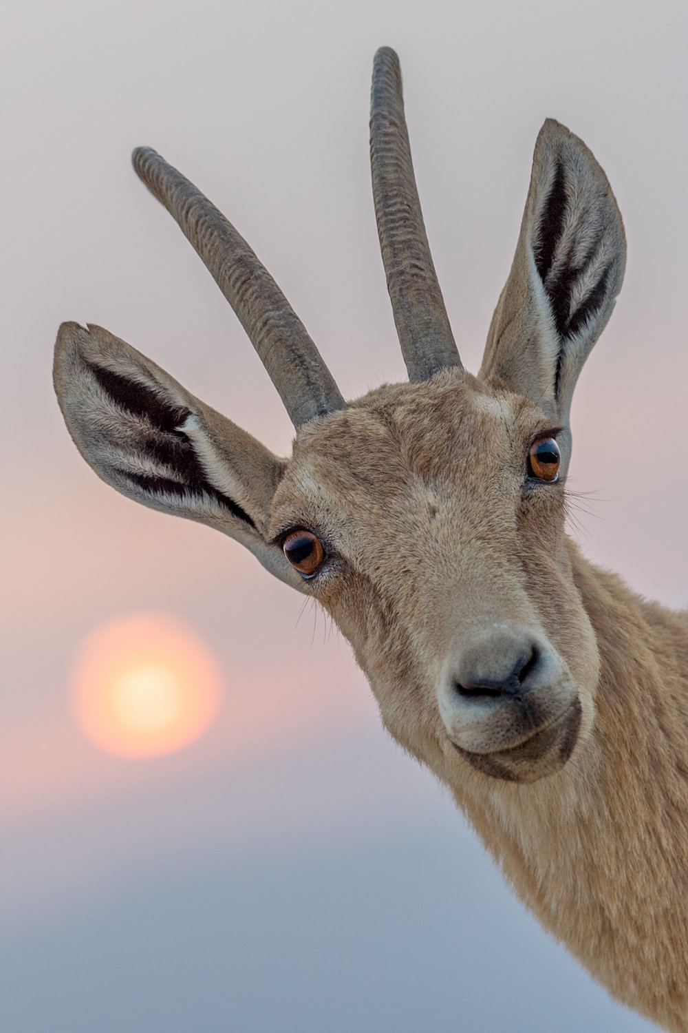 The Ibex and the Sunrise