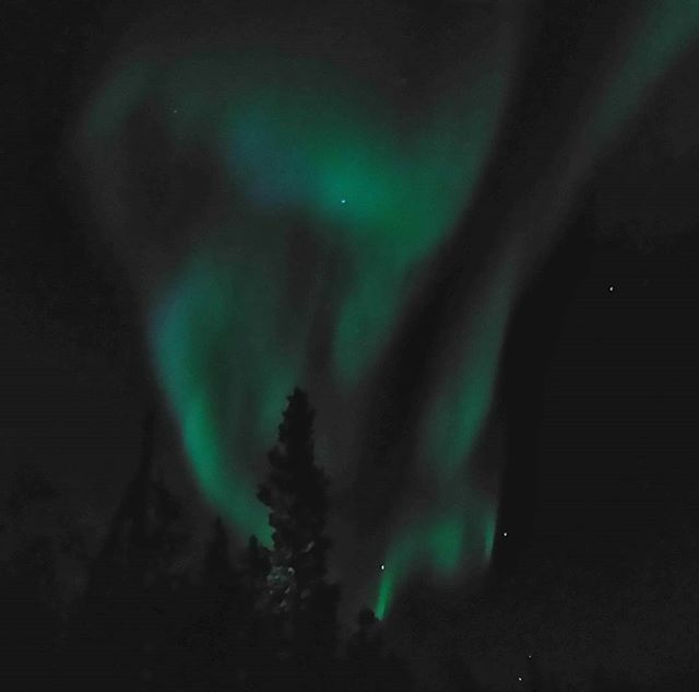 the sky danced again tonight on my evening stroll with the mini she-wolf #nocamera #nofilterneeded #northernlightsnocameraagain #mobilephoneauroras #northernlights #skyonfire #therewasalsopinkipromise