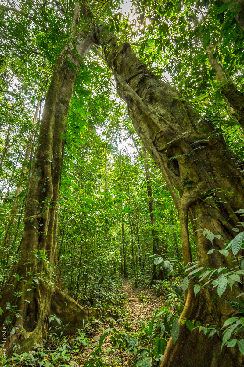 1-MalaysanRainforest-5872.jpg