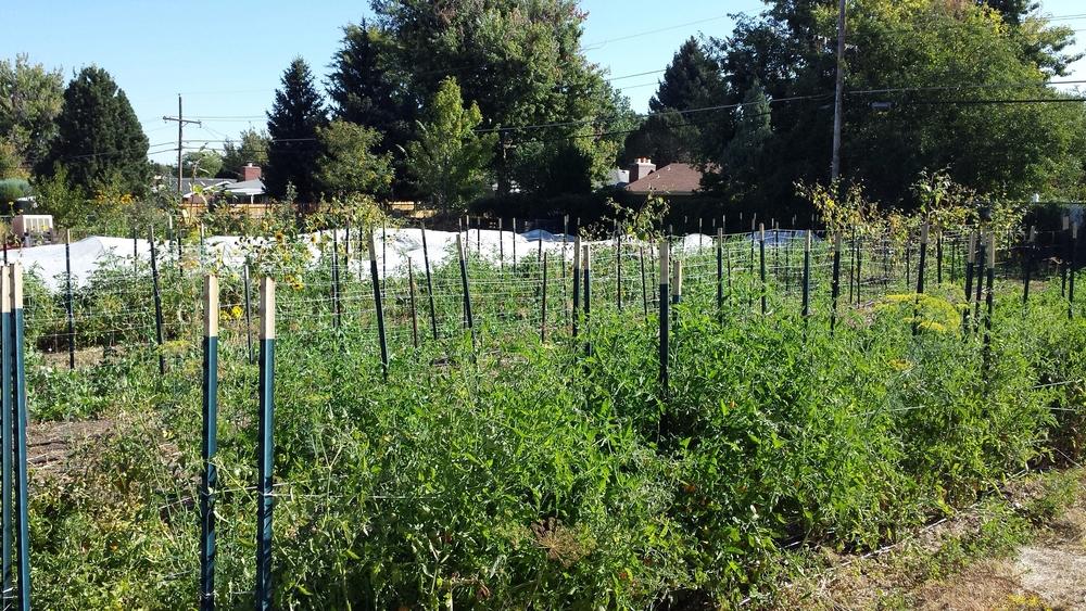 Sprout City Farms - a sustainable urban farm in Denver, Colorado
