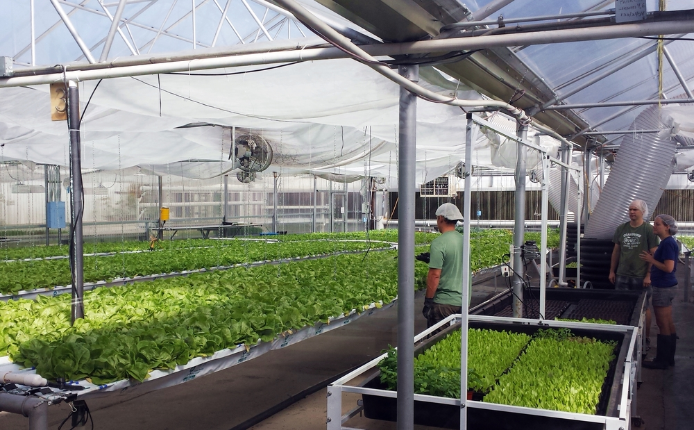The GrowHaus Hydroponic farm. So many calories of lettuce!