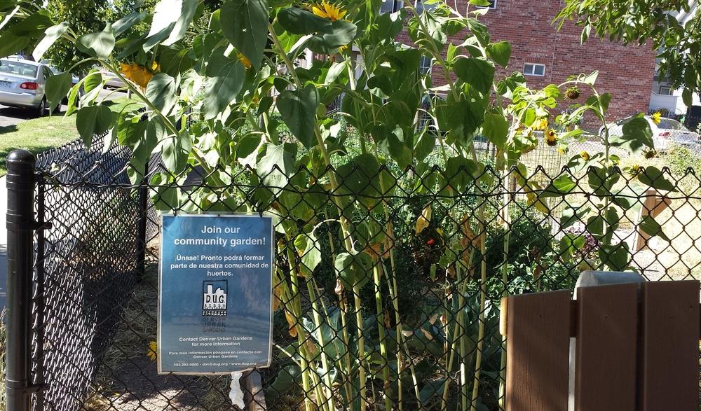 Food Field Trips: Denver   Denver Urban Gardens (Part 3 Of 3)