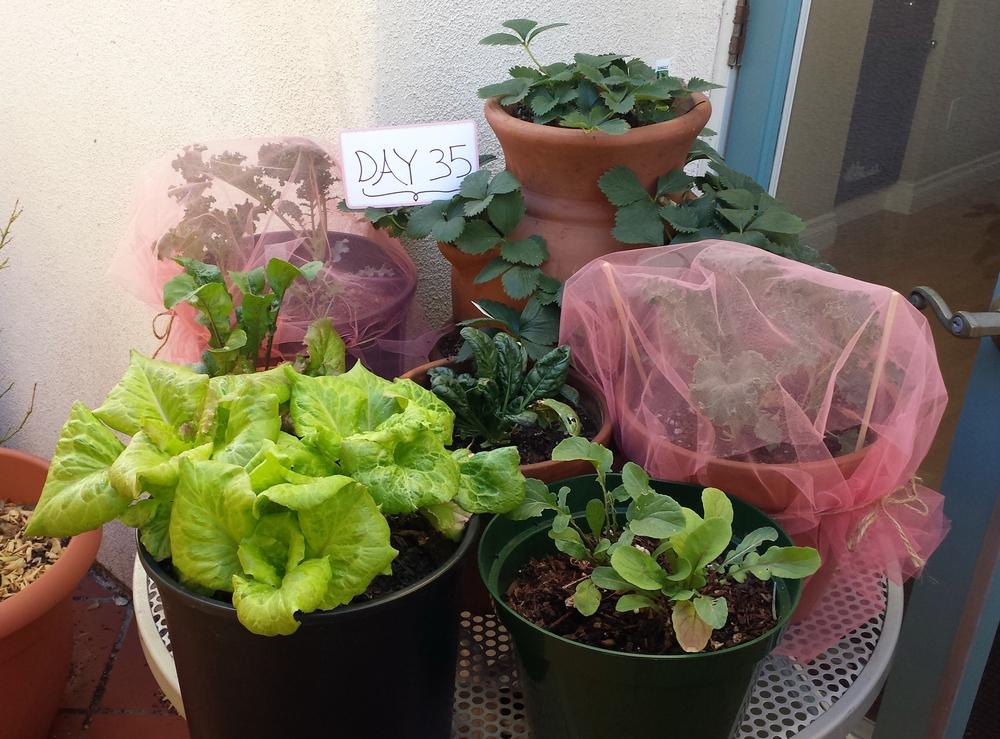 sustainable food urban garden los angeles