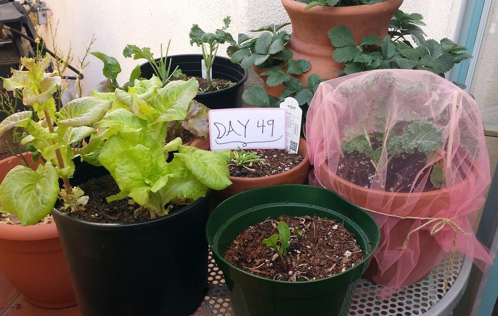 organic urban garden growing