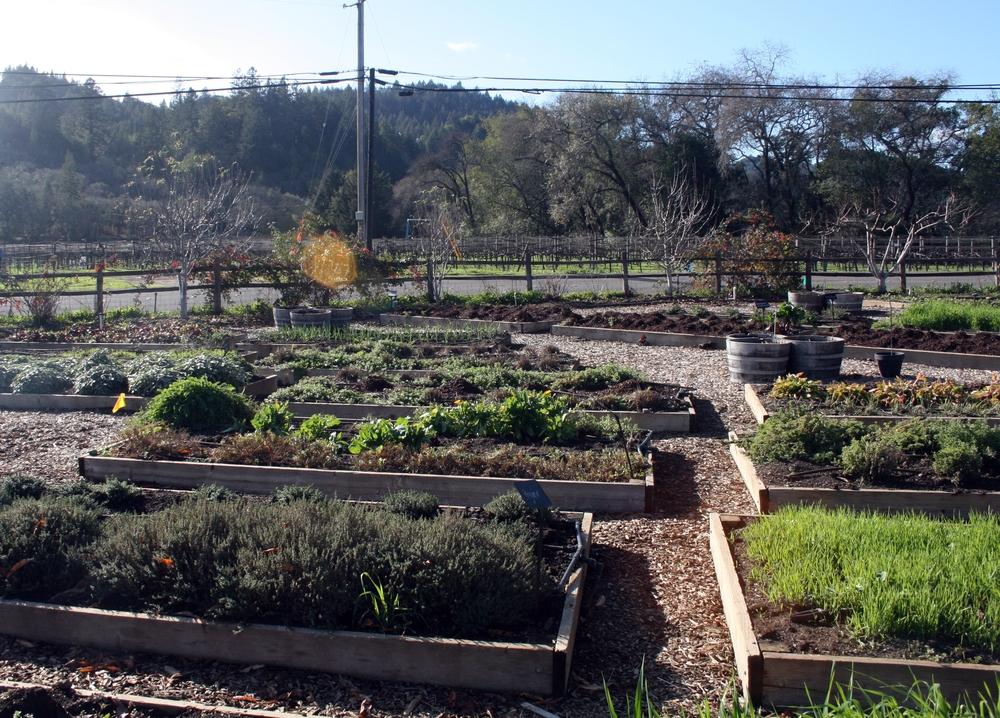 Organic garden at sustainable winery in Healdsburg, CA