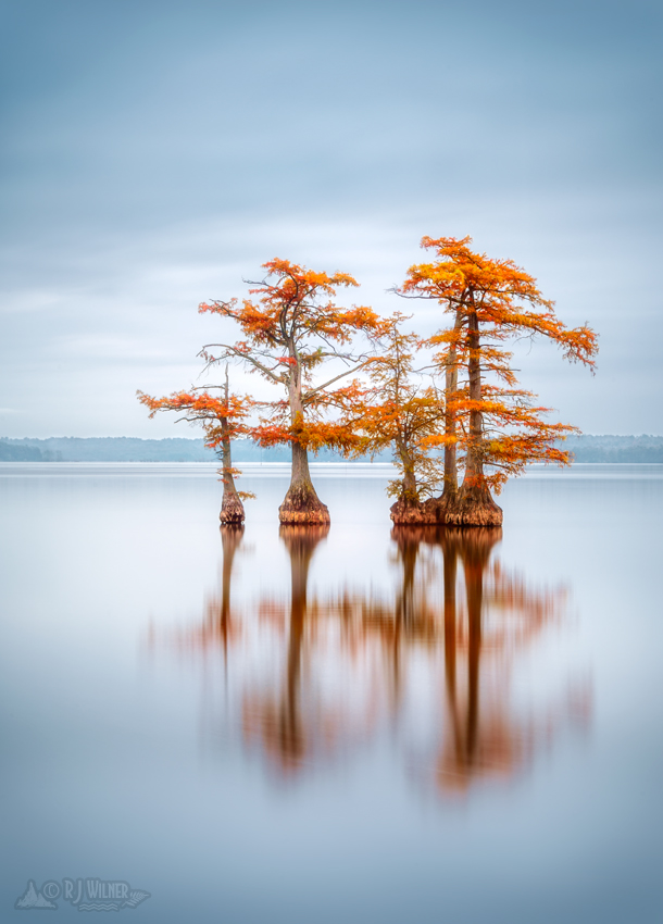 Reelfoot Lake 018
