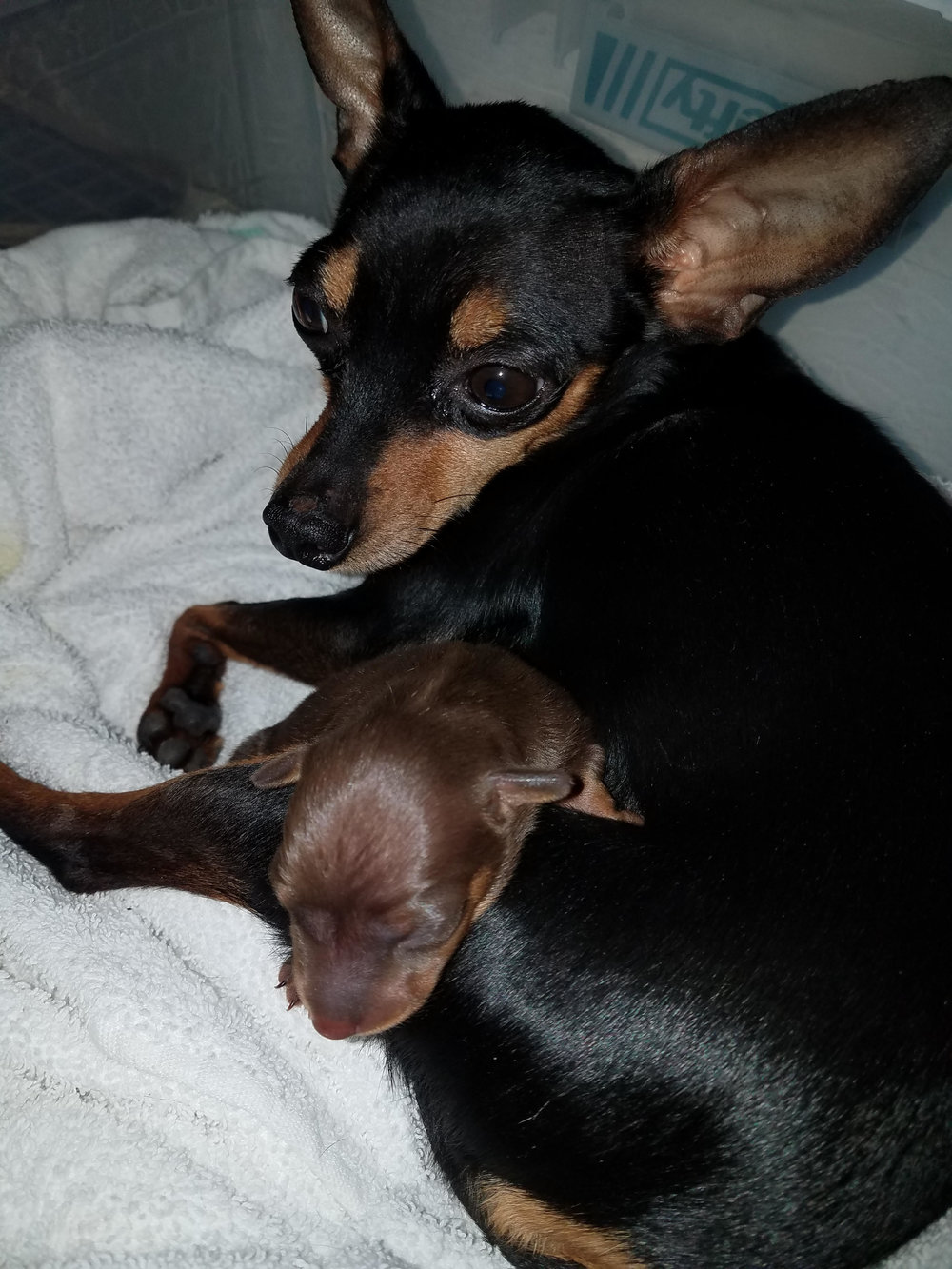 Bella and her baby Alina -