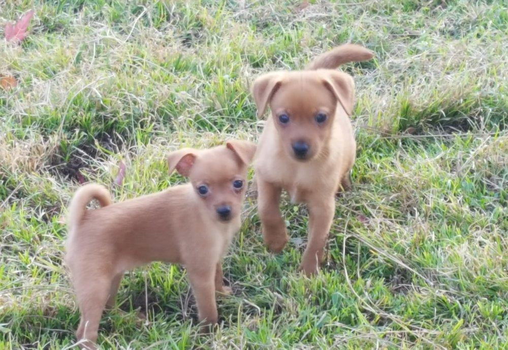fawn pups.jpg