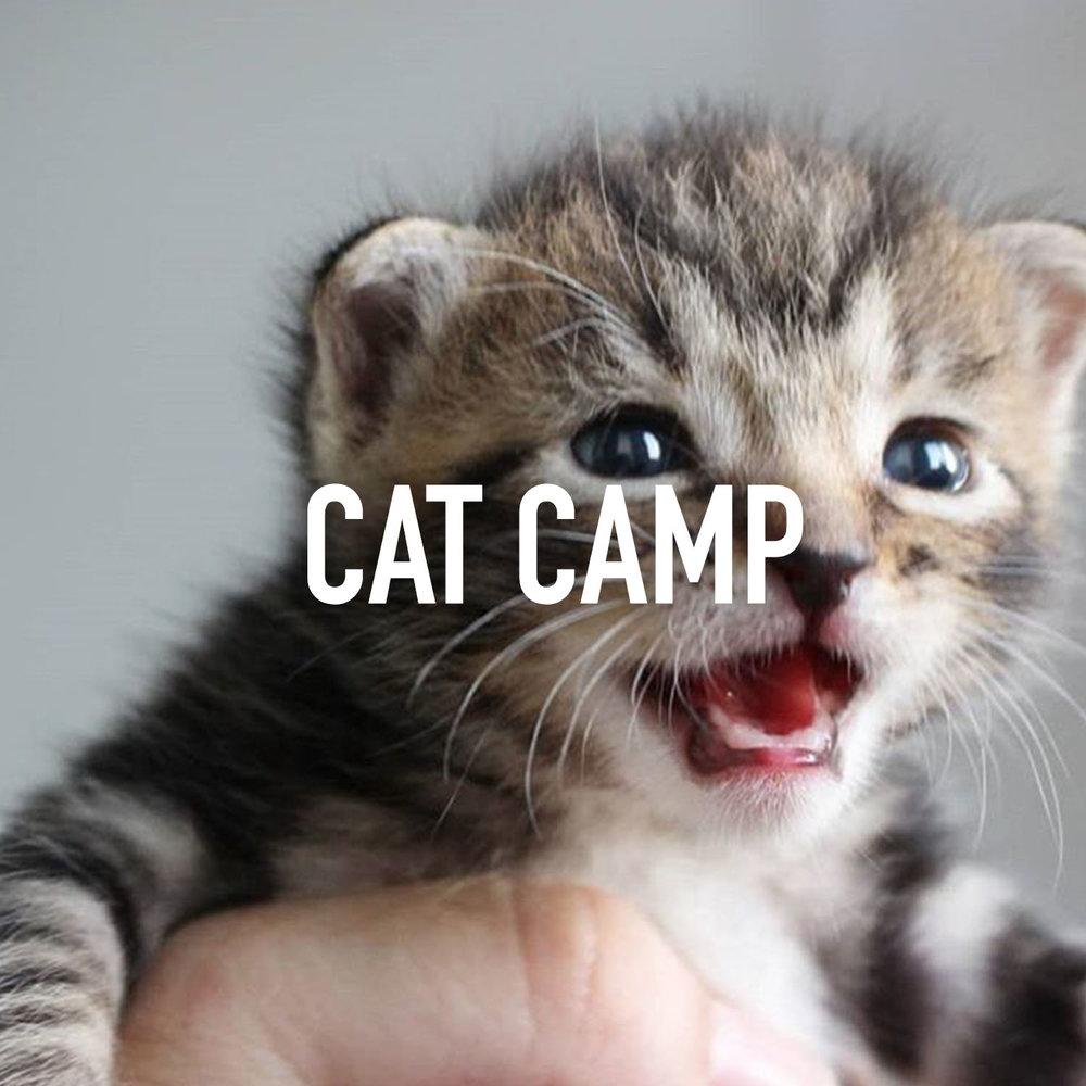 CATCAMP.jpg