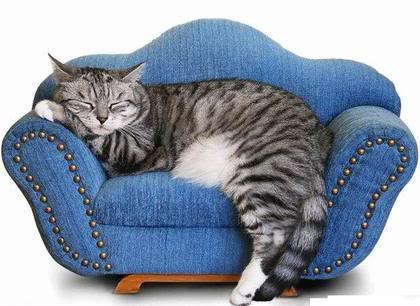 Image result for cat on couch