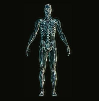 skeleton-1243818__340.jpg