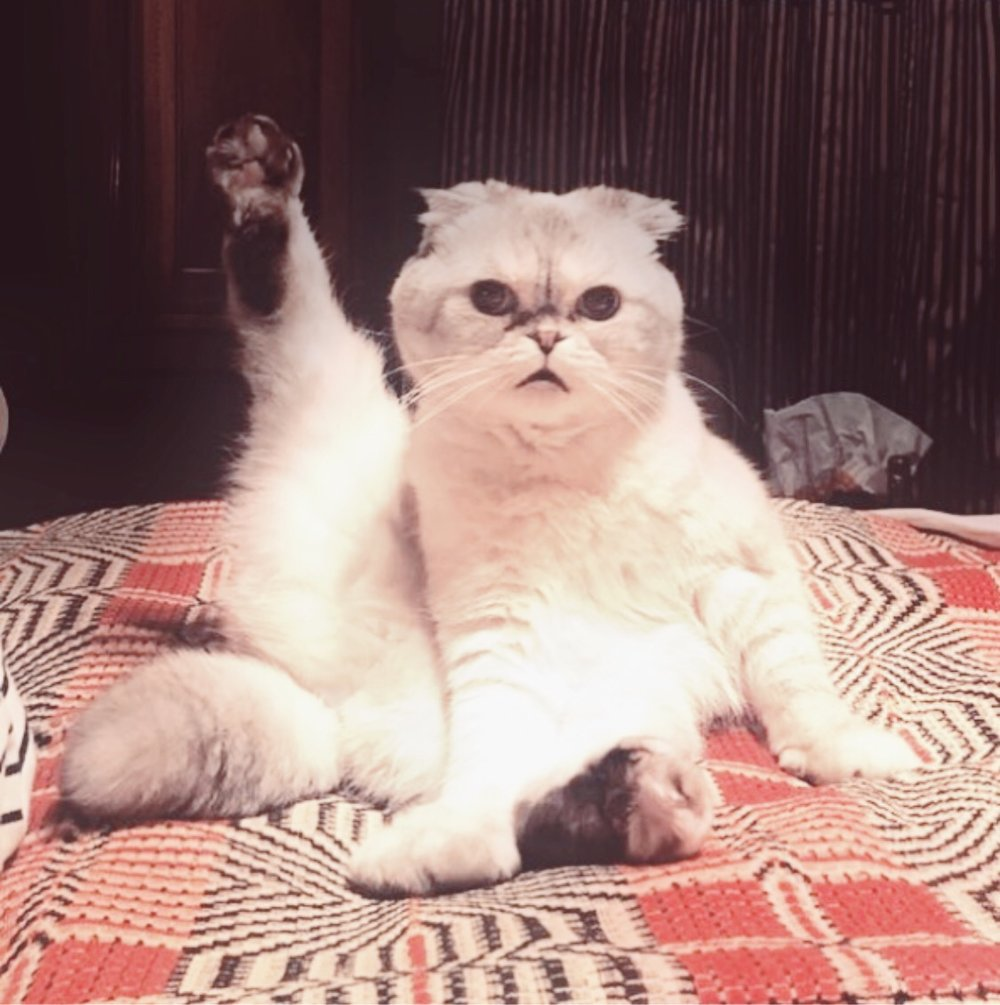Taylor Swift recently posted this cute pic of her cat on Instagram in reference to the stretching she and her team are doing before their choreography session in preparation for her upcoming world tour.