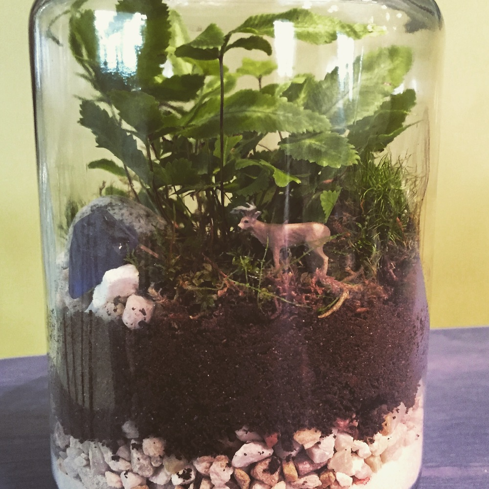 A terrarium can be a special to you or as a gift.