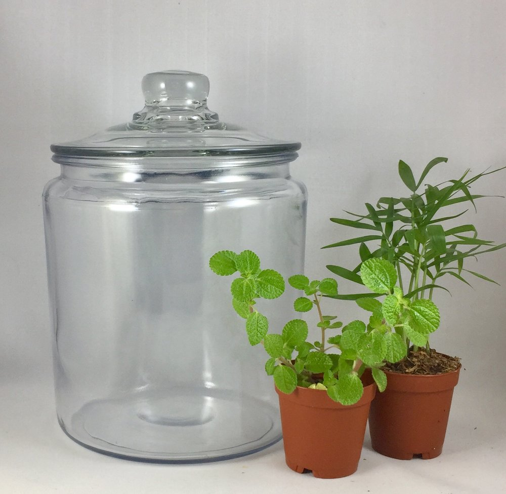 Medium Clear-top Terrarium - $35 includes: 8 inch clear-top jar, two plants, base sands, dirt, decorations and tote bag.