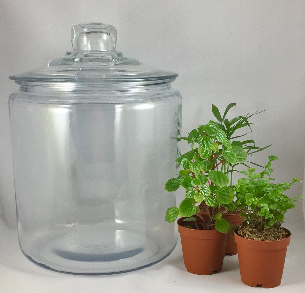 Large Clear-top Terrarium - $45 includes: 10 inch clear-top jar, three plants, base sands, dirt, decorations and tote bag.