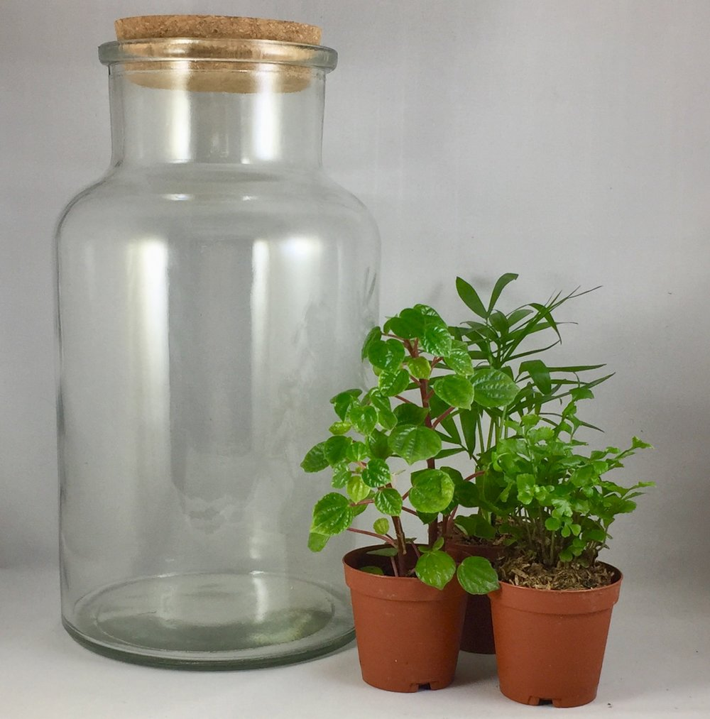 Large Corked Terrarium - $40 includes: 10 inch cork top terrarium, three plants, base sands, dirt, decorations and tote bag.