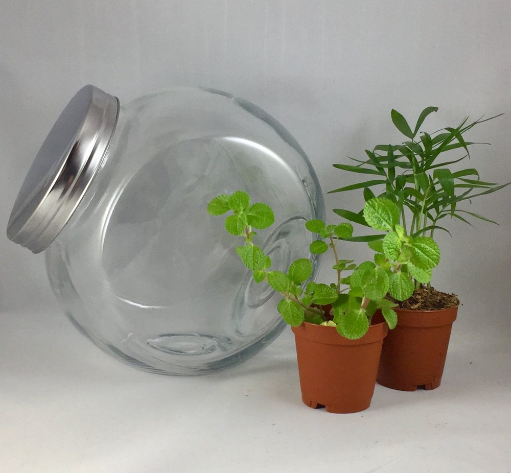 Medium Tilted Terrarium - $30 per person includes: 7 1/2 inch round jar, two plants, base sands, dirt, decorations and tote bag. Takes about 45-60 minutes.