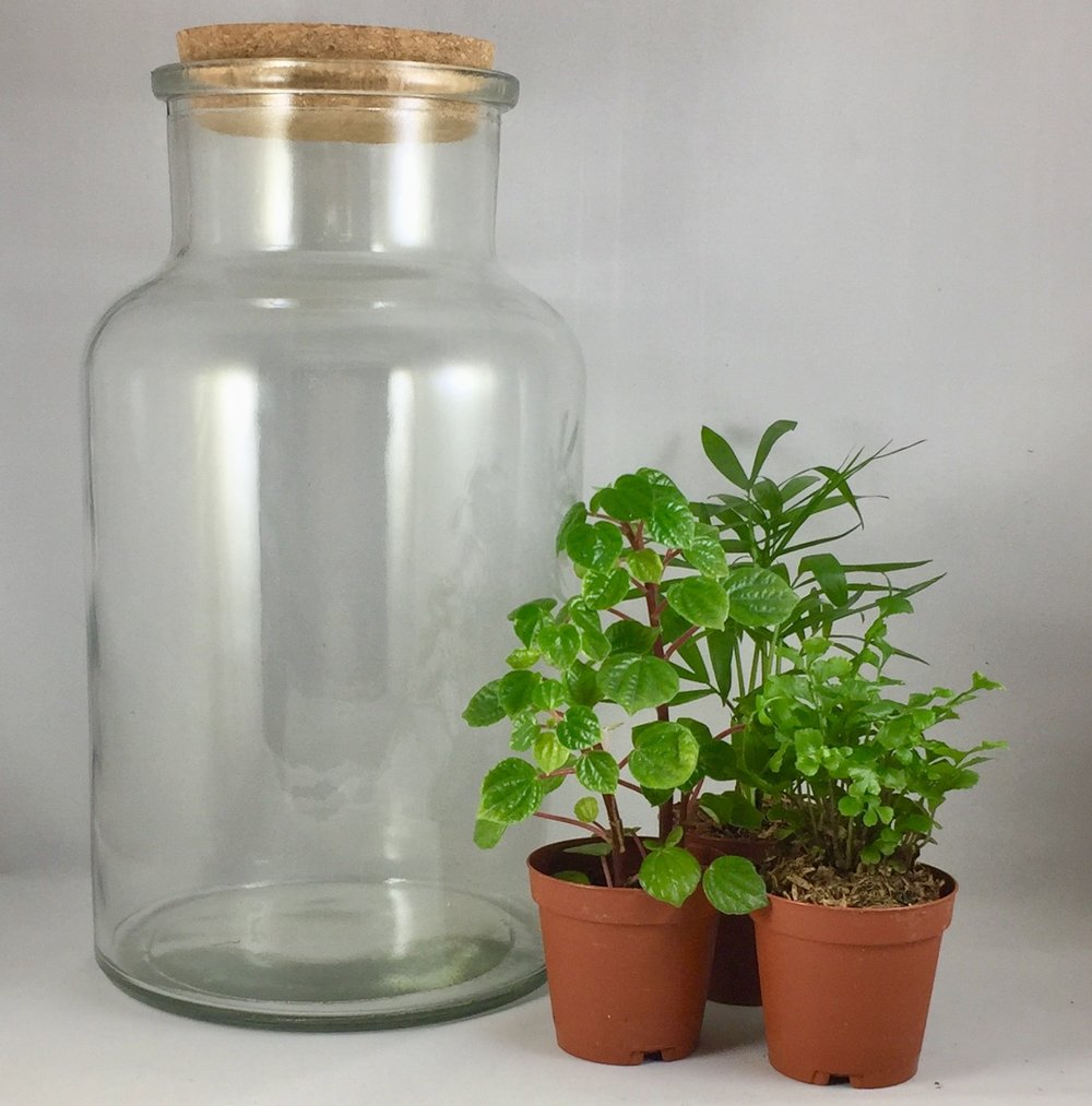 Large Corked Terrarium - $40 per person includes: 10 inch cork top terrarium, three plants, base sands, dirt, decorations and tote bag. Takes about 60-90 minutes.
