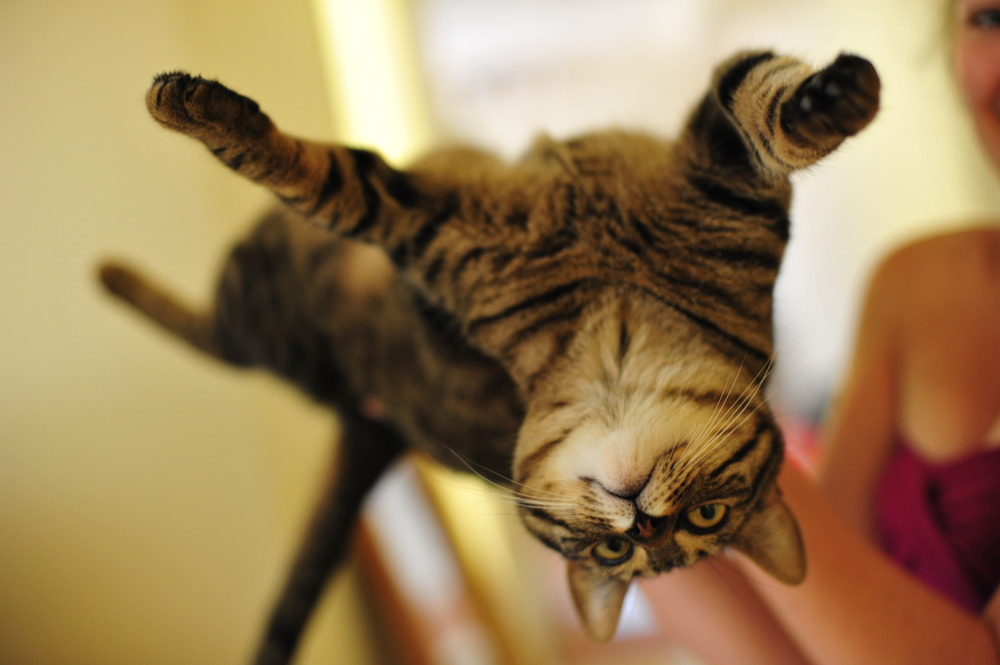 upsidedowncat