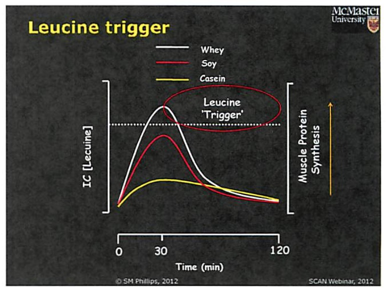 Phillips, Stuart. (2012).   Leucine Trigger.   The Importance of Dietary Protein in Resistance Exercise-Induced Adaptation: All Proteins Are Not Created Equal.   Retrieved from http://scan-dpg.s3.amazonaws.com/resources/DOCS/webinars/2012_The_Importance_of_Dietary_Protein_in_Resistance_Exercise_Induced_Adaptation_webinar.pdf.