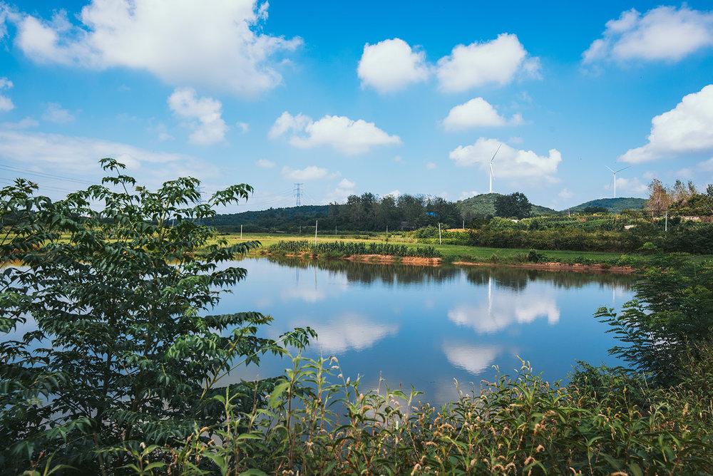池塘、蓝天、白云,夏日宁静的午后。农村的午后真的超宁静,除了蝉声与风声就没有了,城市里完全感受不到的宁静。