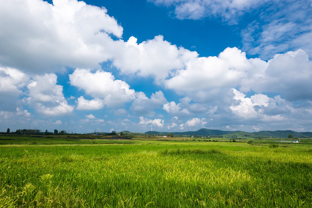 这种感觉让我产生了去甘南草原的错觉