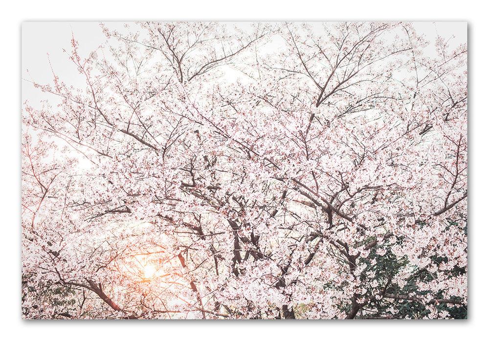 20150327-_DSC7833-Edit.jpg
