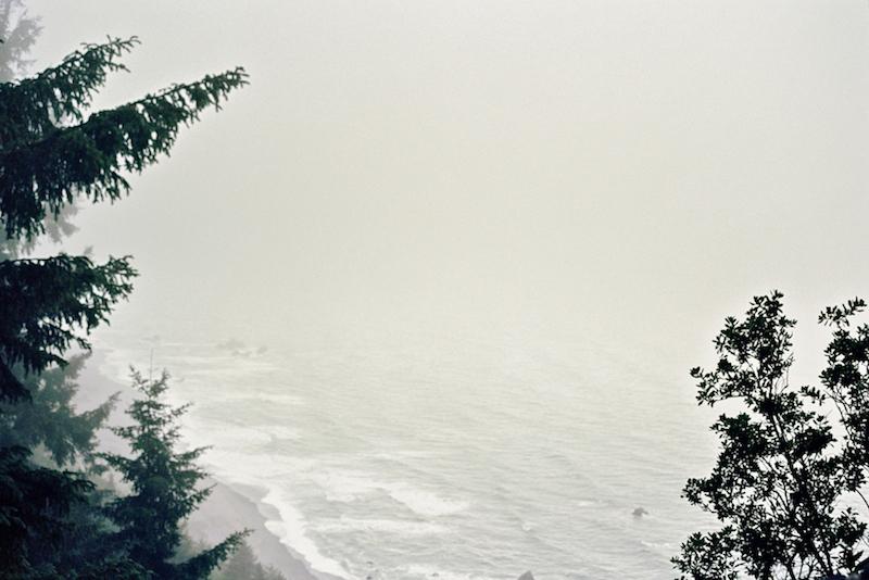 redwoods-38.jpg