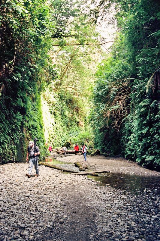 redwoods-46.jpg
