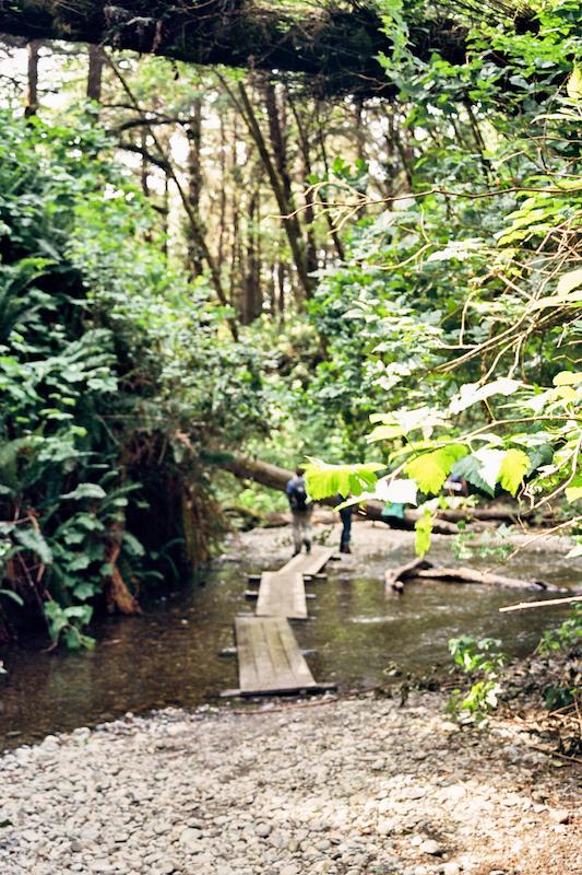 redwoods-48.jpg