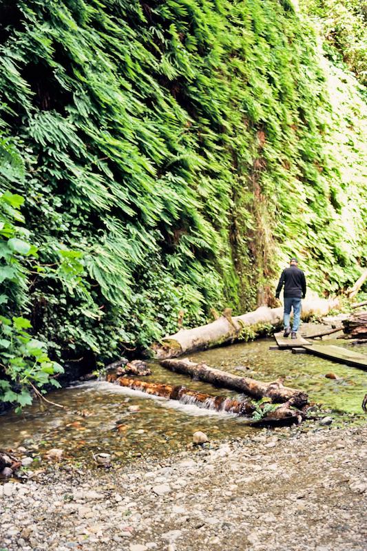 redwoods-47.jpg