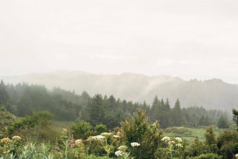 redwoods-55.jpg