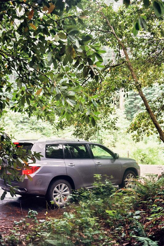 redwoods-67.jpg