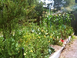 Private and Community Vegetable Gardens - A Growing Trend?