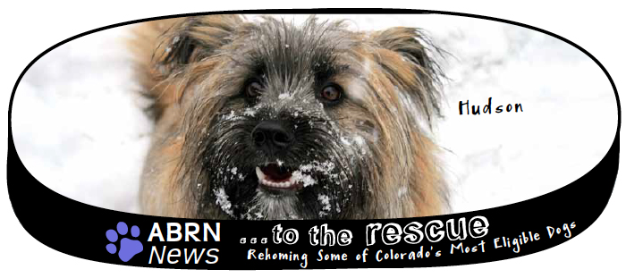 All Breed Rescue Newsletter